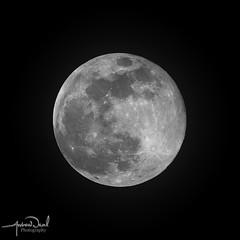 Super Snow Moon (AndyNeal) Tags: moon supermoon fullmoon supersnowmoon nightphotography nightsky