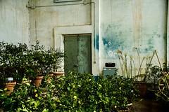Boboli (audun.bie) Tags: italy florence firenze boboligardens boboli limonaiaannalena plants lemons citrus greenhouse garden tuscany