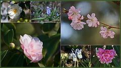 💚 Frühlingserwachen  💚 (Kindergartenkinder 2018) Tags: natur frühling blumen gruga park kindergartenkinder