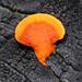 Fungus sp
