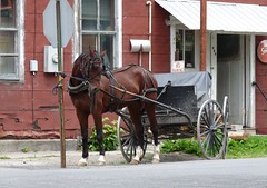 No Parking (jmunt) Tags: amish horse rural