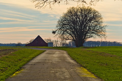 Country Road Morning (ramseybuckeye) Tags: road landscape tree nature trees sky grass barn countryside country path rural green spring field outdoor travel way alley beauty blue sunrise countryroad narrow silo silos farm farming agriculture wheat