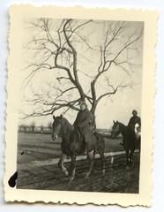 . (Kaïopai°) Tags: france occupation wwii ww2 wehrmacht besetzung soldier uniform soldat soldaten horse pferd reiter baum tree old vintage