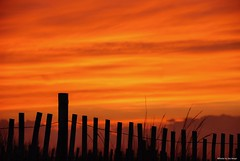 It was a sunset to remember 2....HFF!!! (Joe Hengel) Tags: itwasasunsettoremember2 hff happyfencefriday fencefriday fenceline fence friday sunset evening eveninglight eveningskies lowerslowerdelaware lsd lewes lewesde sussexcounty silhouette silhouettes clouds watchingthesunset capehenlopenstatepark capehenlopen statepark park