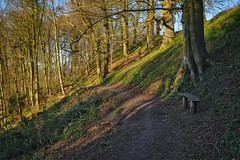 Contemplation in the Woods (margaretgeatches) Tags: green bluebellleaves blue sky beechmast steepslopes restingplace woodenbench path beechtrees trees thelady'swalk montacute southsomerset