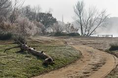 Tudela Rive Gauche (Luis L.Modrego) Tags: espagne españa navarra navarre spain spanien tudela brouillard bruma brume fog foggy niebla ebro hierba paisaje parque cielo árbol ngc