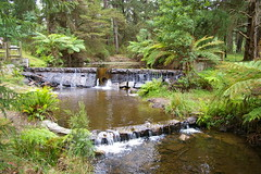 Peaceful Place (Jan Diamond) Tags: donnelleysweir healesville reflections treeferns