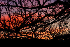 Sunrise through the trees, Canyon Wren Ranch (Luke Robinson) Tags: lee texas comfort canyonwrenranch hillcountry usa family ranch 2019 jerry robinsons