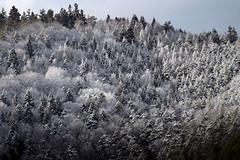 Winterwald (Pfalzfotos) Tags: rheinlandpfalz rlp pfalz winterwald wald