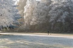wee dog big world (RCB4J) Tags: rcb4j ronniebarron scotland sony1650mmf28dtssm sonyilca77m2 art ice photography snow winter borderterrier pup dogwalking trees comporition on1 leadinglines perspective sonyalpha