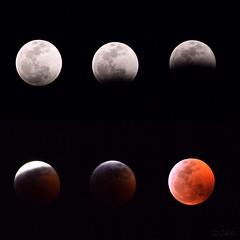Lunar Eclipse 2019 (davidreyes1) Tags: eclipse space love nikonphotography d3300 nikon lowexposure stars bloodmoon lunareclipse moon astrophotography nightphotography