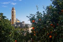 Orange(s)-and-Blue-(Sky) (RS...) Tags: corse cervione oranges campanile bleu nikon1 v2
