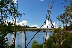 Burnett River Bundaberg (Dreaming of the Sea) Tags: saturdaylandscape burnettriver bundaberg queensland australia bridge steelarchbridge greenleaves mangrovetree bluesky clouds tamronsp2470mmf28divcusd nikond7200