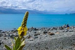 20181226 018 Lake Pukaki (scottdm) Tags: 2018 december lakepukaki newzealand southisland summer travel