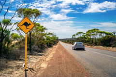 Country outback with yellow kangaroo road sign (anekphoto) Tags: australia outback road sign kangaroo traffic kangaroos travel yellow warning wildlife danger nature country rural crossing roadsign red symbol sky south animal wild street safety drive silhouette aussie bush native beware caution illustration landscape blue australian orange outdoor icon nobody tourism vacation trip transport information land remote center desert cross