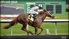 Cozze Kid - March 1, 2019 Allowance / Optional Claiming Race (billypoonphotos) Tags: tapeta golden gate fields berkeley jockey horse racing thoroughbred dirt track photo picture photography photographer billypoon billypoonphotos nikon d5500 18140mm nikkor news stretch win finish synthetic race 18140 mm sign sport stadium building grass people road cozze kid shanghai chestnut filly 2019 gomez alejandro