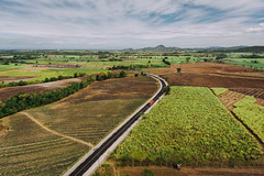 Aerial photo of sugarcane fields in Sagay