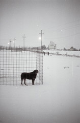 ce morceau du monde (asketoner) Tags: dog cage snow winter children playing road landscape empty hungary balaton field countryside barking