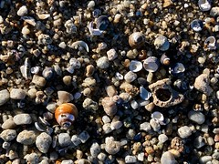 Asilomar (patia) Tags: asilomar beach california ocean shells xmas2018