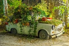 Nature Car (PatrickHansy) Tags: kittenberger gärten österreich austria niederösterreich natur auto trabbi fahrzeug ddr museum europa europe car driving plants pflanzen