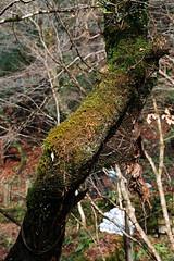 SDQ_1115 (koyaman3422) Tags: 京都 kyoto sigma sdquattro 1770mm 貴船神社