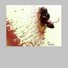 Aldrin_Iglesias_2019_5 (aldrin_iglesias) Tags: rioacimamg brazil aranha spider formiga ant