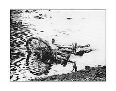 broken bicycle (Armin Fuchs) Tags: arminfuchs japan bicycle reflection water lumixfz50 osaka