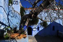 Chefchaouen, Morocco, January 2019 D700 376 (tango-) Tags: chefchaouen bluecity villaggioblu bluevillage morocco maroc 摩洛哥 marruecos марокко المغرب