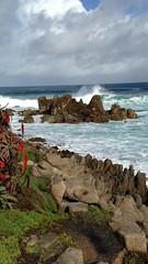 IMG_3191 (mudsharkalex) Tags: california pacificgrove pacificgroveca