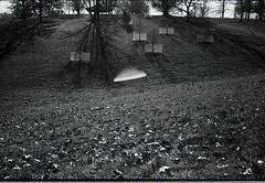 Alien encroachment. (probusphotos) Tags: bnwphotography lightflare fotografia filmisnotdead voigtlander 35mm ifttt instagram