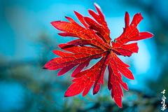 Autumn... (N.Batkhurel) Tags: season autumn plant closeup mongolia macro ngc nikond800 nikon nikkor natur 105mm