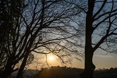 19S_0826 (SYShin) Tags: nikon d850 2470f28 tamronsp2470mmf28divcusd sunset sky sun atardecer cielo sol tree arbol corea korea 니콘 탐론 석양 일몰 하늘 태양 해 나무 진주