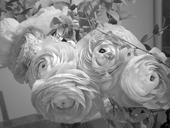 harada-flowers-70 (annie harada) Tags: flowers hana blumen fleurs bouquet noir et blanc black white