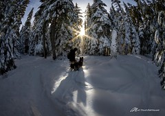 Look to the light (Matt Straite Photography) Tags: snow light sun star starburst dog trees winter hood mountain portland oregon fisheye canon nature landscape forest hike