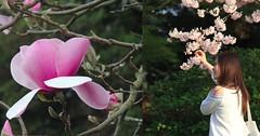 """""""des fleurs ça fait plaisir"""" She says (Pierre♪ à ♪VanCouver) Tags: 花 春 花見 fleur flower avril april jeunefille younglady ragazza magnolia cherryblossom sakura 女の子 vancouver バンクーバー"""