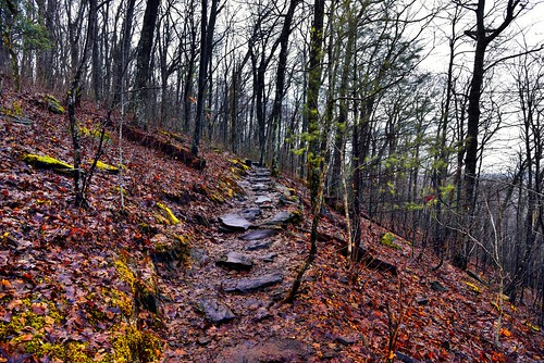 I Was in Solitude Even as I Walked Amongst the Tall Trees (Appalachian National Scenic Trail)