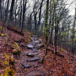 I Was in Solitude Even as I Walked Amongst the Tall Trees (Appalachian National Scenic Trail) thumbnail
