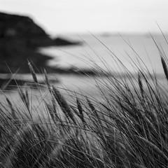 Oyé! Oyé l'Oyat dans le vent! (Phil5135) Tags: oyat beach plage monochrome noiretblanc blackwhite