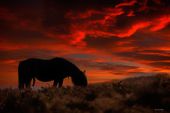 Será la primavera (Carpetovetón) Tags: cielo caballo amanecer colores contraluz animal horse nubes nikond200 tamron70200