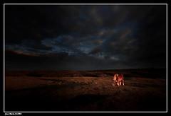 Poney dans la Lumière..... (faurejm29) Tags: faurejm29 canon campagne ciel sigma sky nature paysage poney