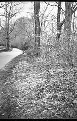 winding pathway, landscape, Biltmore Estate, Asheville, NC, Kodak No. 1 Autographic Jr., Kodak Tri-X 400, HC-110 developer, 3.28.19 (steve aimone) Tags: pathway winding landscape latewinter biltmore biltmoreestate asheville northcarolina no1autographickodakjr kodaktrix400 hc110developer folder 6x9 120 120film film monochrome monochromatic blackandwhite mediumformat