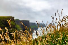 YOBEL_2018-06-17_IRL_0715.jpg (yobelprize) Tags: grass countyclare ireland muchang water nikond850 cliffsofmoher ocean outdoors cliffside outcrops wildatlanticway clare nikon cliffs rocky 2018 lush wet yobel wheat roadtrip atlantic stormy nature mist yobelmuchang fog irl green moher coast coastline field galway