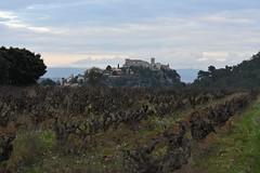 Sant Martí Sarroca (esta_ahi) Tags: santmartísarroca vinya viña viñedo vineyard vitisvinifera penedès barcelona spain españa испания