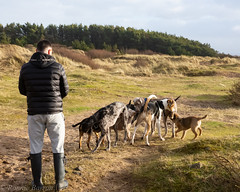 hole lotta sniffin (RCB4J) Tags: ayrshire ayrshirecoast clydecoast firthofclyde irvinebeach rcb4j ronniebarron scotland sony18250mmf3563dtaf sonyslta77v art dogwalkingphotography dogs fun nature photography running sonyalpha wildlife