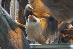 Peace Lodge Animal Sanctuary. #nature #travel #costarica #hummingbird #sloth #frog #sanctuary (ryan.a.brown1) Tags: nature travel costarica hummingbird sloth frog sanctuary