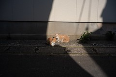 On the border line (t_eriguchi) Tags: voigtlander sonyalpha streetphoto street sunshine sunny cats
