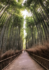 Arashiyama Bamboo Grove - Kyoto (Japan) (Andrea Moscato) Tags: andreamoscato giappone japan asia japanese 日本 nihon nippon asian light luce green shadow ombre prefecture attraction ombra site national nature natura natural naturale landscape paesaggio day sun sunshine white sky cielo view vivid vista scenic parco park trees history historic ancient treasure wood art giardino branch kyōto tree silhouette path pathway street strada road walk walkway fence leaves legno forest bosco perspective people tourist brown sand sagano alberi bamboo