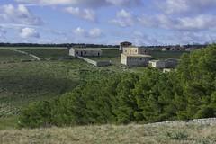apulian landscape (Paolo Dell'Angelo (JourneyToItaly)) Tags: parconazionaledellaltamurgia altamura puglia italia landscape apulia italy