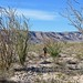 Behind the ocotillo plants