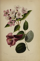 n744_w1150 (BioDivLibrary) Tags: gardening horticulture usdepartmentofagriculturenationalagriculturallibrary bhl:page=57724341 dc:identifier=httpsbiodiversitylibraryorgpage57724341 artist:name=augustainneswithers augustainneswithers hernaturalhistory
